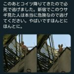 新宿駅でウサギの着ぐるみを着た180センチ以上ある大男に襲われる事件が多発中!!